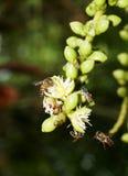 Flores de la abeja y de la palma Imágenes de archivo libres de regalías