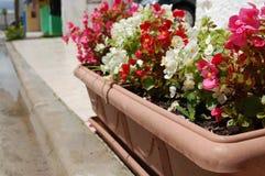 Flores de la acera Fotografía de archivo