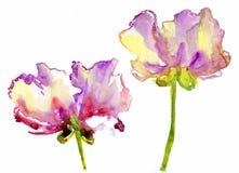 Flores de la acuarela ilustración del vector