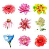 Flores de la acuarela Fotografía de archivo