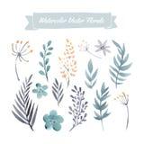 Flores de la acuarela stock de ilustración