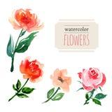 Flores de la acuarela Fotografía de archivo libre de regalías