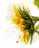 Flores de la acuarela Colección de los girasoles Foto de archivo