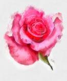 Flores de la acuarela Colección de rosas Imagen de archivo libre de regalías
