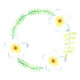 Flores de la acuarela del bosquejo Imagen de archivo