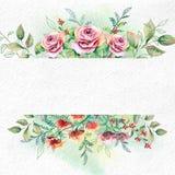 Flores de la acuarela en el papel blanco de la acuarela Imagen de archivo