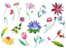 Flores de la acuarela fijadas Foto de archivo