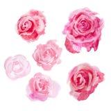 Flores de la acuarela rosas Fotografía de archivo