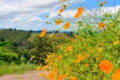 Flores de la aguja española de la falta de definición en naturaleza Fotos de archivo