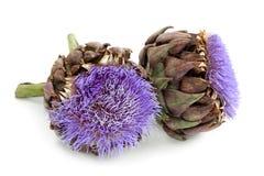 Flores de la alcachofa Foto de archivo libre de regalías
