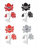 Flores de la amapola Imagenes de archivo