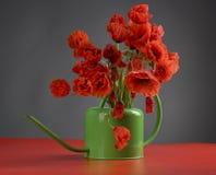 Flores de la amapola Fotografía de archivo