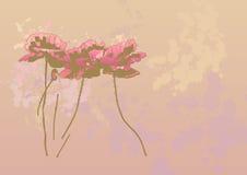 Flores de la amapola ilustración del vector