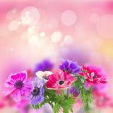 Flores de la anémona Fotos de archivo