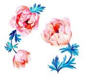 Flores de la anémona stock de ilustración