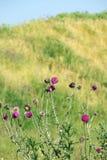 Flores de la bardana con las abejas Fotos de archivo libres de regalías