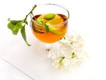 Flores de la baya del vino imagen de archivo libre de regalías