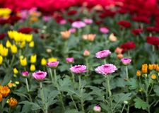 Flores de la belleza imágenes de archivo libres de regalías