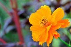 Flores de la belleza Foto de archivo libre de regalías