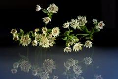 Flores de la belleza fantástica de la fauna Fotografía de archivo libre de regalías