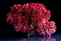 Flores de la belleza fantástica de la fauna Imagen de archivo libre de regalías