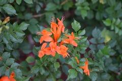 Flores de la belleza de la naturaleza fotografía de archivo libre de regalías
