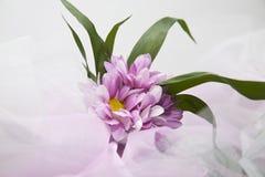 Flores de la boda. fondo del velo Fotos de archivo libres de regalías
