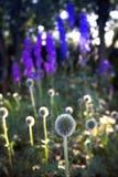 Flores de la bola foto de archivo libre de regalías