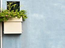 Flores de la buganvilla en potes en el muro de cemento azul Imágenes de archivo libres de regalías