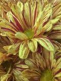 Flores de la caída fotografía de archivo