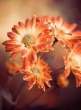 Flores de la caída