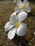 Flores de la caída Fotos de archivo