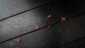 Flores de la caída Imagen de archivo libre de regalías