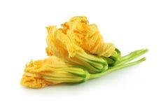 Flores de la calabaza foto de archivo