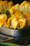 Flores de la calabaza amarilla Fotos de archivo libres de regalías
