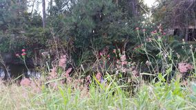 Flores de la cama de cala Foto de archivo libre de regalías