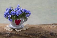 Flores de la campánula fotos de archivo libres de regalías
