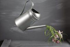 Flores de la campánula en regadera gris metálica del vintage, copie el espacio Imagen de archivo libre de regalías