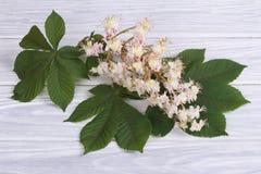 Flores de la castaña con las hojas verdes Imagen de archivo libre de regalías