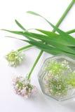 Flores de la cebolla verde Imágenes de archivo libres de regalías