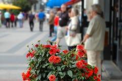 Flores de la ciudad Fotografía de archivo libre de regalías