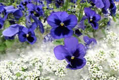 Flores de la ciudad fotografía de archivo