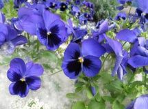 Flores de la ciudad imagen de archivo libre de regalías