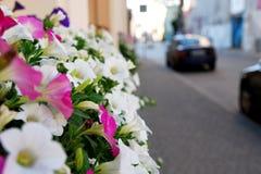 Flores de la ciudad Imagen de archivo