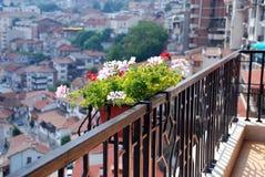 Flores de la ciudad Foto de archivo libre de regalías