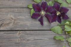Flores de la clemátide púrpura en fondo de madera Imagen de archivo
