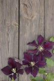Flores de la clemátide púrpura en fondo de madera Fotos de archivo libres de regalías