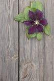 Flores de la clemátide púrpura en fondo de madera Fotos de archivo