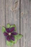 Flores de la clemátide púrpura en fondo de madera Fotografía de archivo