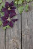 Flores de la clemátide púrpura en fondo de madera Foto de archivo libre de regalías